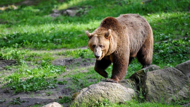 Смъртта на животното обаче предизвиква сериозно напрежение в Каталуния