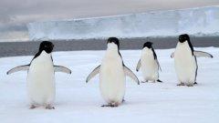 Голям айсберг е препречил пътя им към морето