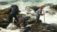 Доброволци почистват нефта от брега на Kоста дa мортe