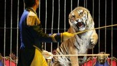 Балкански уточни, че законът не забранява на собствениците са циркове да притежават диви животни, сочейки за пример неговите камили