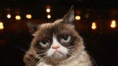 Най-известната котка в интернет почина на 7 години