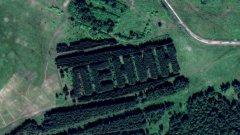 Гражданите в Омск обаче нямат никаква представа кога и как са засадени боровете