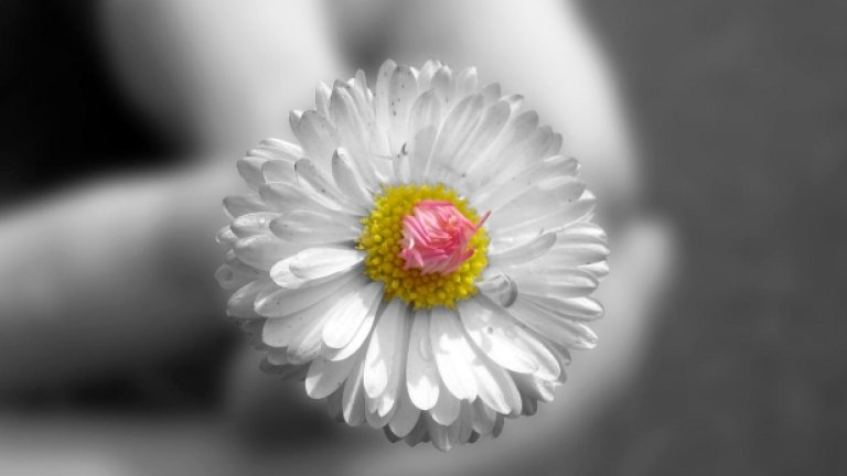 Осми март не е празник, а международен ден на женската борба за равенство и права. Не позволявайте да ви подкупят с едно цвете...