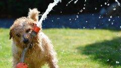 Няколко съвета как кучето ни да чуе и изпълни командите ни