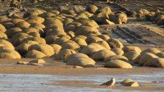 Известният като Bowling ball beach в Калифорния се отличава със скалните си блокове, които през хилядолетията са добили гладка сферична форма