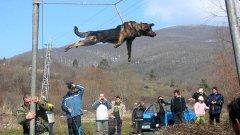 Варварският обичай тричане вече е престъпление, което ще се наказва със затвор, както и организирането на боеве с кучета или ако допуснете кучето ви да ухапе тежко друг човек, решиха днес депутатите