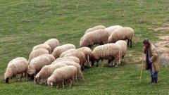 Те искат по-високи компенсации за фермерите от Странджанско