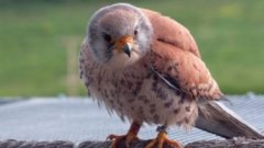 10 000 лева награда получи проект за опазване на защитена птица