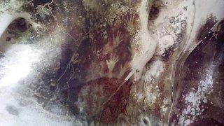 Най-старата скална рисунка на животно е на 45 000 години