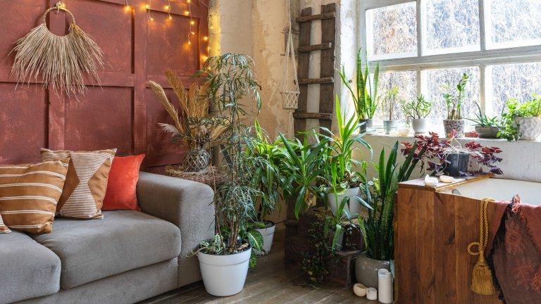 И растенията са бохемиБохо дизайнът се оказва малко плосък без присъствието на растения. Ролята на ботаниката е важна - обитателите на саксиите не само носят естествен акцент на закритите пространства, което е ключово за този стил, но са естествена връзка с природата.  Нашето предложение е да си устроите зелен кът, вместо да разпръсквате растенията из цялото пространство - така присъствието им в стаята е по-явно и категорично.