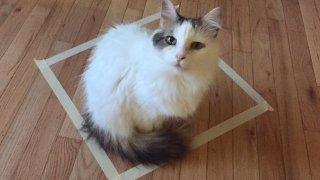 Защо котките обичат кутии - дори и фалшиви такива