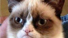 Котката натрупа популярност с необичайната си физиономия, която изразява едновременно досада и липса на интерес
