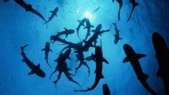 Вижте в галерията 8 неща, от които е по-вероятно да загинете, отколкото от нападение на акула...