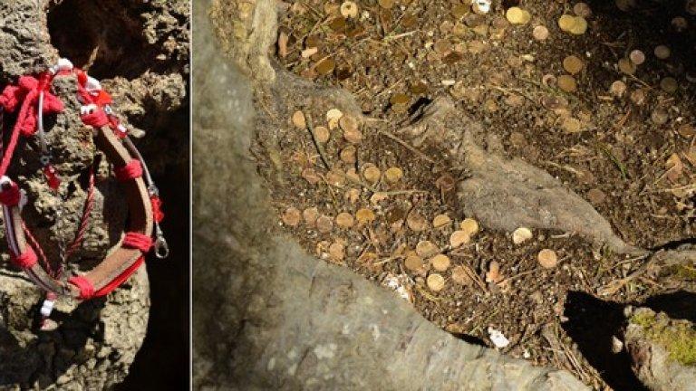 За здраве и късмет туристите окичват клоните му с мартенички и поставят жълтици в корените.