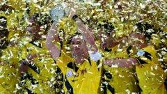 През лятото Дортмунд спечели Суперкупата на Германия, след което работата тръгна на зле.
