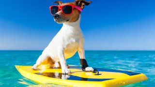 SOS*: слънчево изгаряне при кучетата
