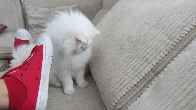 Може да галите котката си с тях и тя няма да се възпротиви. Котките разбират от естетика