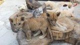 От Зоологическата градина отговарят на критиките за нехуманно отношение и излагат тяхната гледна точка по въпроса