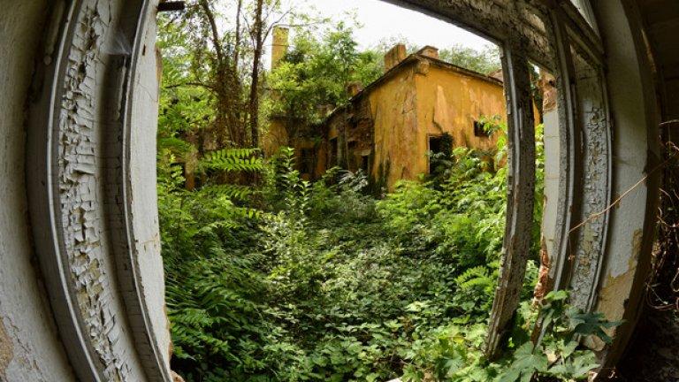 Вътрешният двор на семинарията в наши дни се е превърнал в непроходима гора