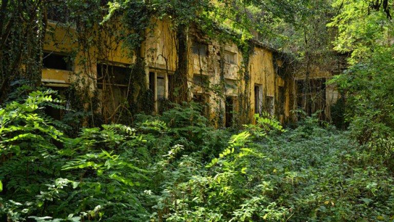В тази джунгла преди време са се намирали банята и сервизните помещения към основната сграда. Днес те едва се забелязват сред плетеницата от клони и листа