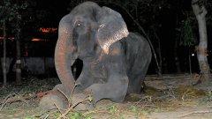 """Говорителят на Wildlife SOS Поя Бинепал казва, че екипът е бил удивен да види как се спускат сълзите по лицето на слона, докато го спасяват. """"Беше толкова емоционално за всички нас. Знаехме в сърцата си, че той осъзнава, че го освобождават"""""""