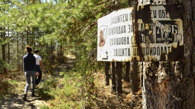 Пътеката продължава през прохладна борова гора.
