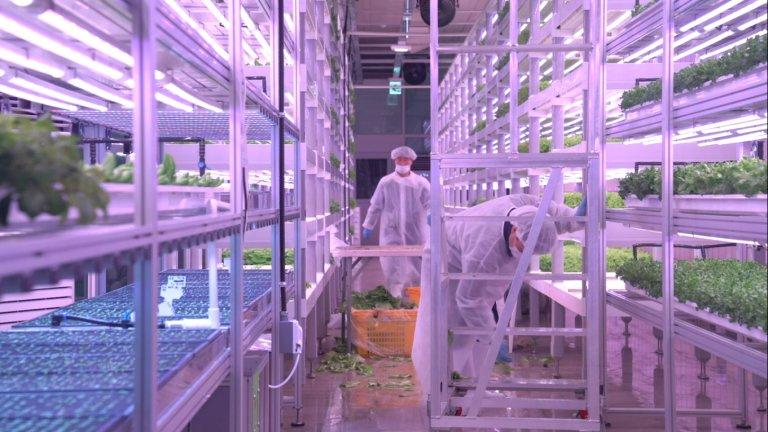 Закритите ферми стават все по-популярни, а браншът се очаква да достигне до 2 години размер от 40,25 милиарда долара годишно