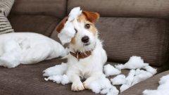 Без да заварите след това погром, унищожение и тъжно кученце