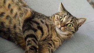 Наистина ли котките виждат призраци?