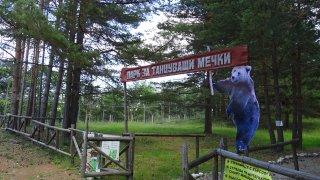 Според ведомството мечката е опасна за хората, макар часове преди това кметът на града да заяви, че никой няма да убива животното