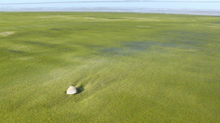 Зеленият плаж във Френска Гвиана