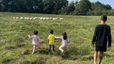 Как стадо овце изгони Роналдо от имението му за 6 млн. паунда