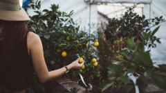 Био-фермерството отново представлява интерес за десницата