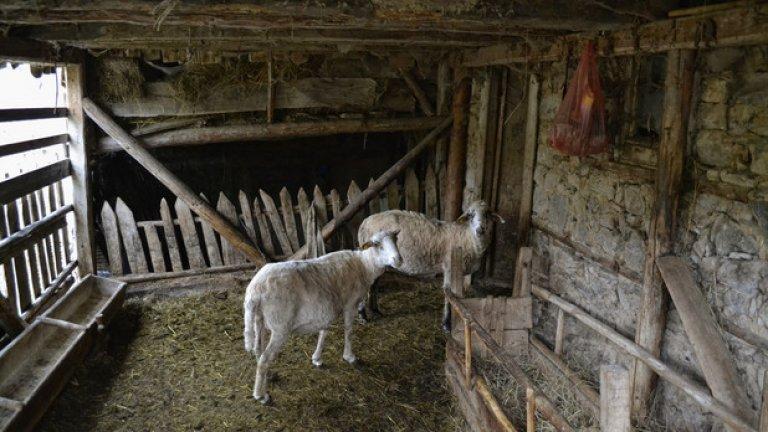 В годините на ТКЗС-тата земята в селото се е обработвала упорито, отглеждали са се и крави. Днес обработваема е само някоя и друга градинка, а кравите са заменени с овце