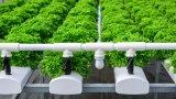 Вертикалното земеделие е работещото решение за местата с по-сложен климат, но и то има своите проблеми