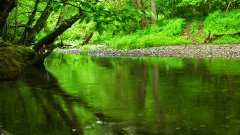 Горното течение на река Велека
