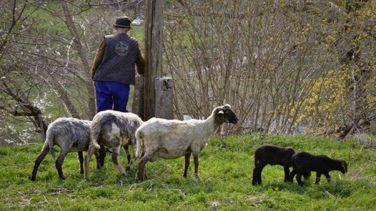 За местните жители няма по-хубаво нещо от родния край и, загърбили изкушенията на градския живот, те продължават да доказват, че българското село все още има място под слънцето