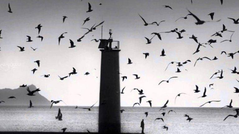 Cinematic Orchestra – Arrival of the Birds and Transformation Заглавието само се представя – пролетта е пристигането на птиците и трансформацията, която британската ню джаз група успява да изрази само с музика като саундтрак на възраждащия се живот.