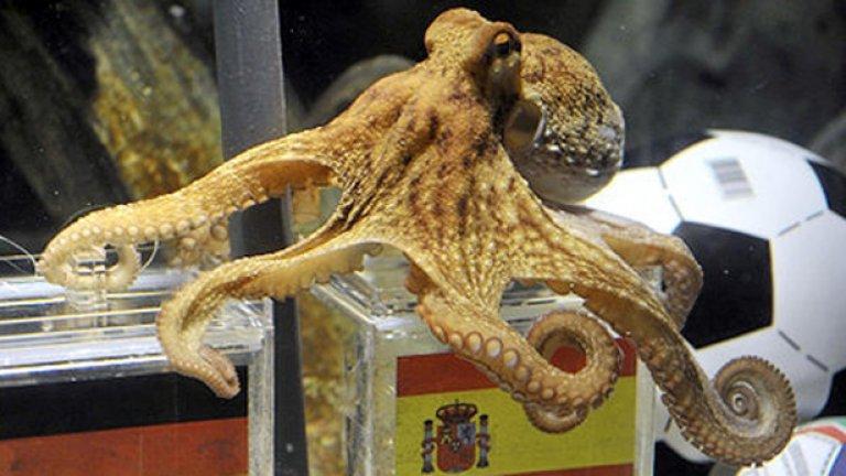 Октоподът Пол редовно познаваше резултата от мачовете на Мондиала през 2010 година