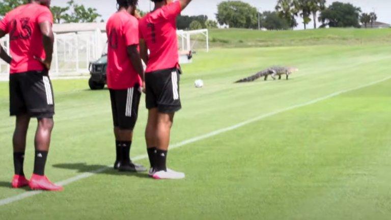Крокодил прекъсна тренировката на елитен тим (видео)