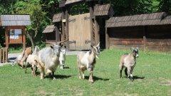 Акцията по даряването е на Националната овцевъдна и козевъдна асоциация