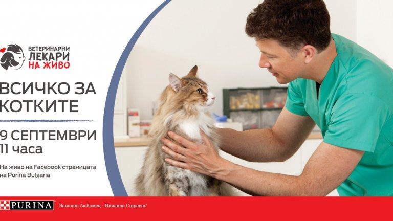Purina® с онлайн обучителна сесия, посветена на грижата за котките