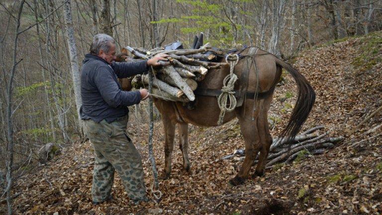 Част от ежедневието на бай Хашо. Старият миньор товари дърва върху катъра си, а здравите му ръце разсичат дебелите клони с един удар