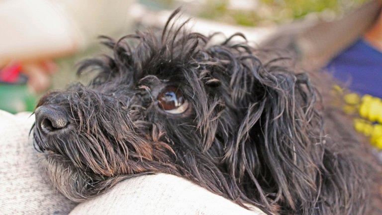 10 очарователни начина, по които кучетата показват любовта си