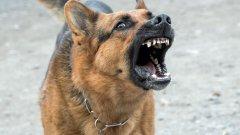 Защо кучетата хапят и какво да направим, за да не го правят