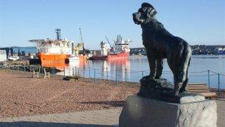 Бамси - талисманът на Норвежката кралска флота