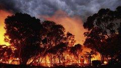 """Властите към жители на щата Виктория: """"Вече е твърде късно да напуснете домовете си"""""""