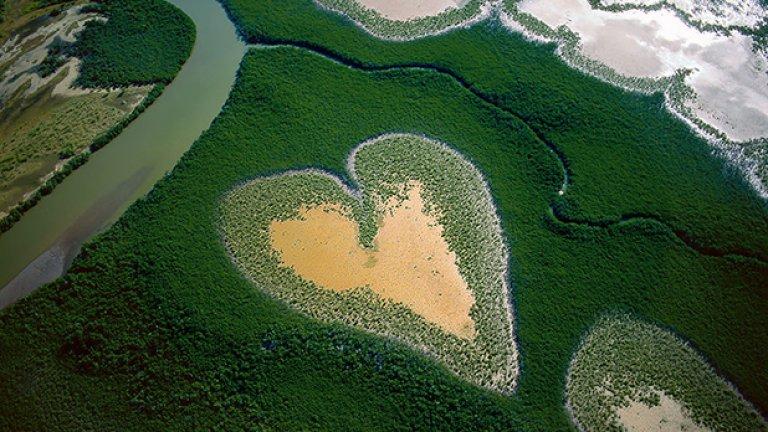 Mangroves, Нова Каледония