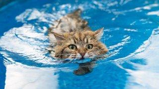Топлинен удар при котките: как да го разпознаем и как да го предотвратим