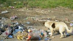 (Не)познатите методи за опазване на околната среда